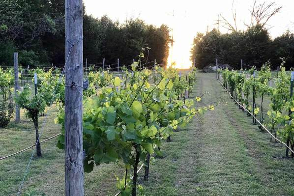 San Martino Winery and Vineyards in Rockwall Texas