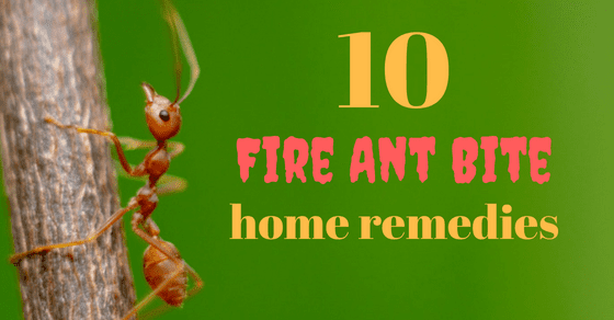 Fighting Fire With Grape Juice 10 Home Treatments For Fire Ant Bites