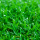 fall lawn care hydrate your lawn