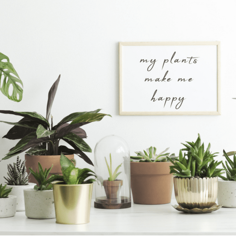 Low Maintenance Landscaping Ideas For A Stress Free 2018: Low Maintenance Houseplants For The Horticulturally Impaired