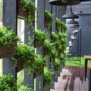green wall, grow your own food on wall
