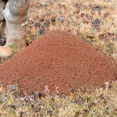 Professional treatment for fire ant mounds in Rockwall TX