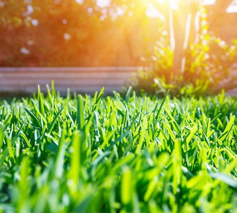Liquid aeration this summer will help you give your lawn the love and attention that it needs to ensure that it grows strong and healthy this summer in Plano, TX.