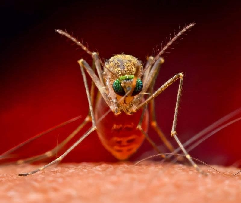Don't let mosquitoes ruin your outdoor fun, invest in summer mosquito control here in Plano, TX.
