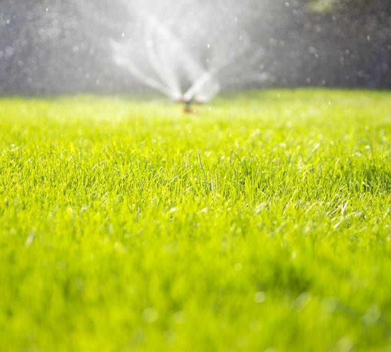 Make sure your lawn gets watered on a budget