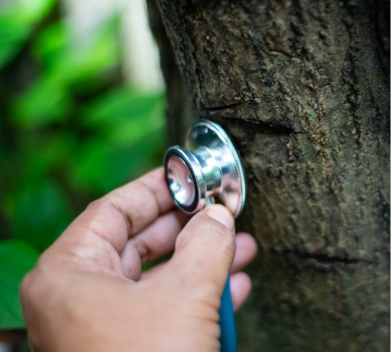 Give your tree a healthy year with these tree care tips for the new year.