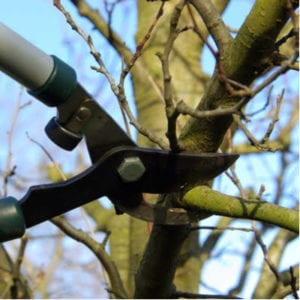 Pruning your trees is one of the best spring tree care things to do so your trees start the year healthy and ready to grow here in Texas.